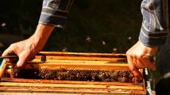 Apiary honey Stock Footage