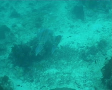 Calmar diving underwater video Stock Footage