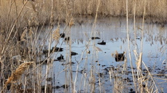 Oil pollution Stock Footage