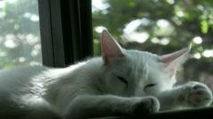 Cat Taking Nap Stock Footage