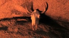 Cow Skull with Fire Reflection Stock Footage