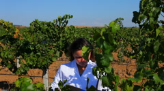 Two experts are testing the grapes - stock footage