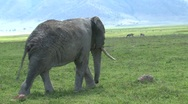 Old Elephant Stock Footage