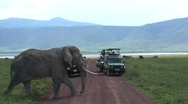 Old Elephant Stock Footage