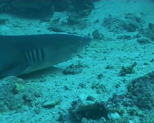 shark diving underwater video - stock footage