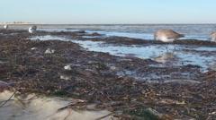 P01366 Shorebirds at Gulf Islands National Seashore Stock Footage