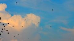 Flying birds Stock Footage