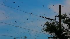 Flight of wild birds Stock Footage