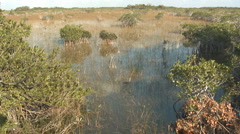 P01378 Everglades National Park Scenery Stock Footage