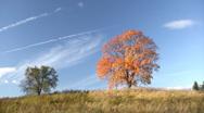 Autumnal trees Stock Footage