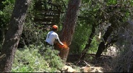 Stock Video Footage of Lumberjack cuts pine tree with chainsaw
