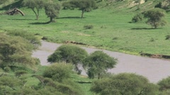 Tarangire river zoom-out - stock footage