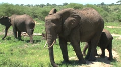 Elephant group in Tarangire National Park Stock Footage