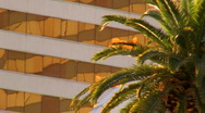 Building and palm tree  V1 - HD Stock Footage