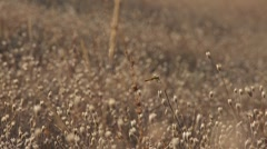 Dragonfly on grass field 02 45s Stock Footage