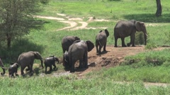Elephants crossing the Tarangire river Stock Footage