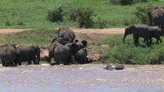 Elephants crossing the Tarangire river Stock Footage