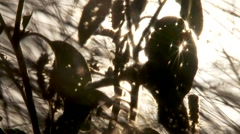 Sun flares though holes in a leaves 60s Stock Footage