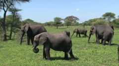 Elephants group Stock Footage