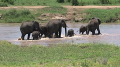 Elephants crossing the Tarangire river - stock footage