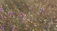 Violet flowers moving by the wind in slow motion Stock Footage
