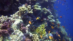 Amazing Coral Reef Wall Stock Footage