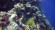Stock Video Footage of Amazing Coral Reef Wall