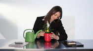 Businesswoman tends to plant. Stock Footage