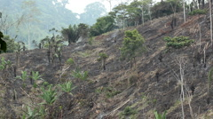 Slash and burn agriculture Stock Footage