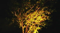 Tree Blowing In Strong Wind At Night 1b Stock Footage