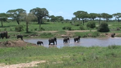 Elephants crossing tarangire river Stock Footage