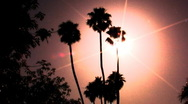Stock Video Footage of Hollywood Sunset Palm Trees 1a