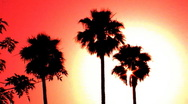 Stock Video Footage of Hollywood Sunset Palm Trees 2a
