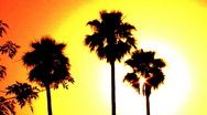 Stock Video Footage of Hollywood Sunset Palm Trees 2c