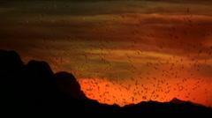 Birds Fly Mountain Sunset Stock Footage