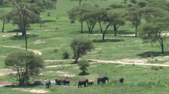 Group Elephants zoom-out Stock Footage