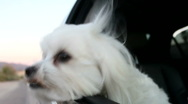 Dog Car Ride Stock Footage