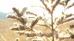 Wild plant with flowers moving by a wind on sunset in slowmotion 60s MJPEG 03 Stock Footage