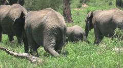 Group Elephants walking away Stock Footage