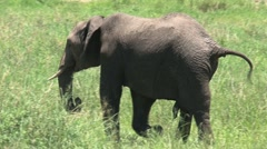 Little Elephant Stock Footage