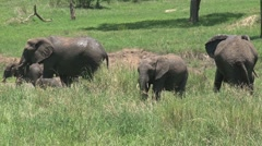 Group Elephants near the tarangire river Stock Footage