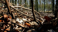 Stock Video Footage of Track up through dried leaves and twigs to woodland trees