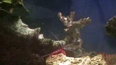 Shrimp Stock Footage