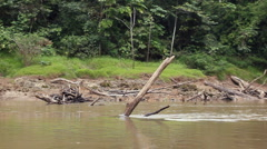 Drifting down an Amazonian river - stock footage