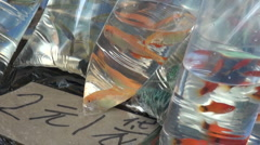 Selling goldfish in plastic bags, animal cruelty in China - stock footage