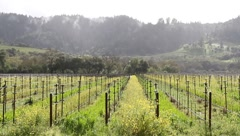 Rutherford CA Vineyards Stock Footage