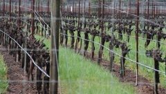 Oakville Vineyards Stock Footage