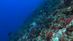 Smooth drift over a coral wall Stock Footage