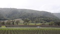 Route 29 Napa Valley Stock Footage