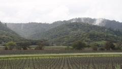 Napa Valley Fog Stock Footage